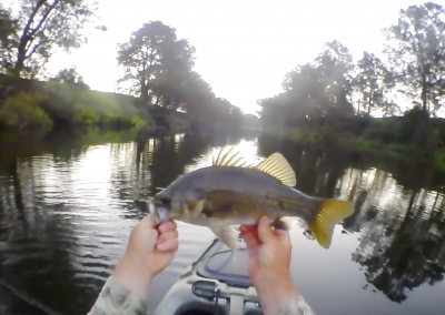 Aussie Bass On Fly
