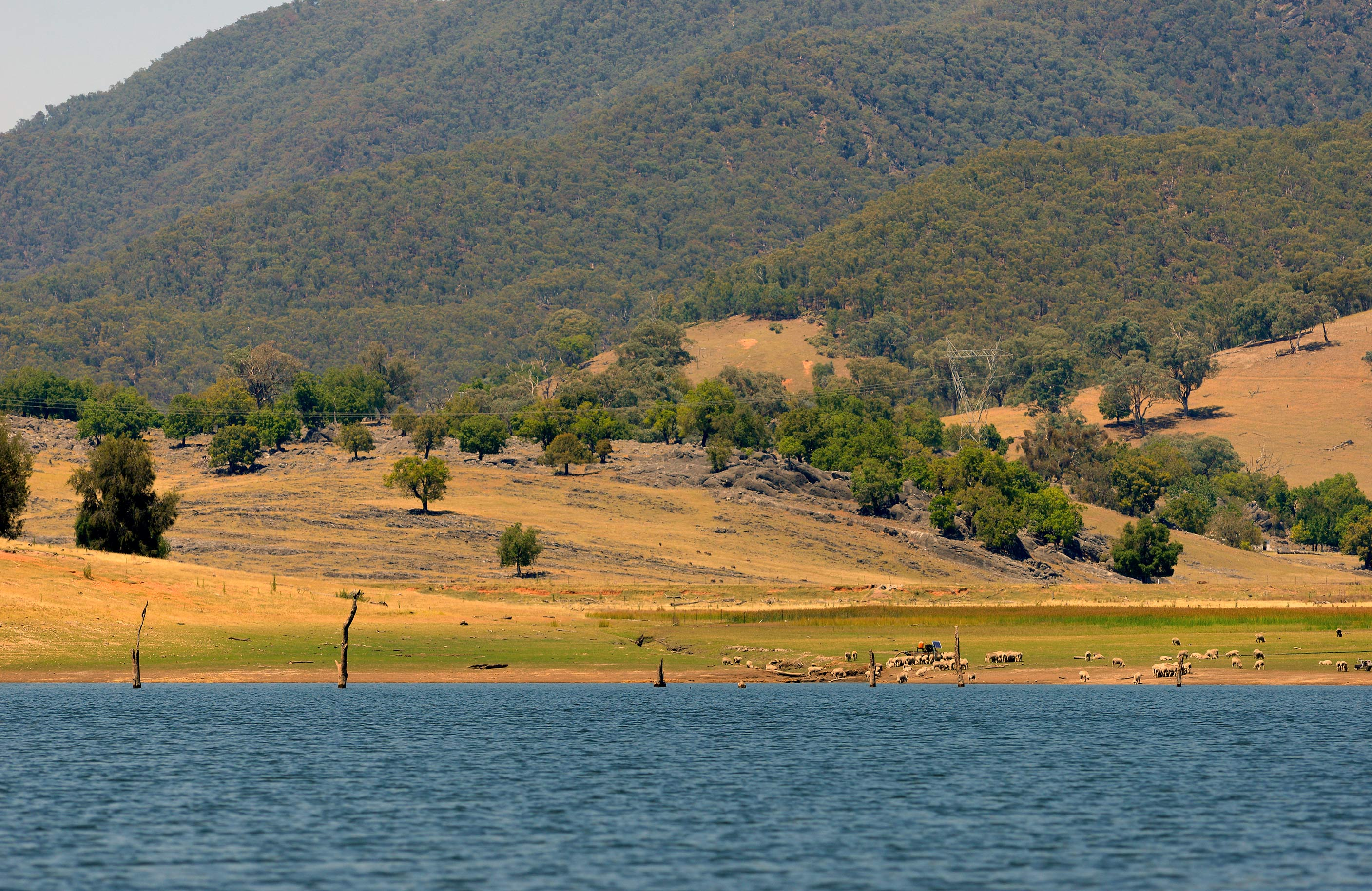 Shallower bays like this — especially if they have a soak or inflow at the back — are prime places to hunt for carp.